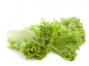 feuilles salade